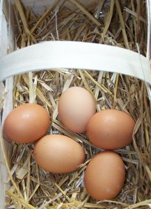 basketful of eggs 2 Successful Internet Business Models